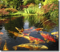 Koi Pond Amp Water Garden Liners By Accugeo Liner